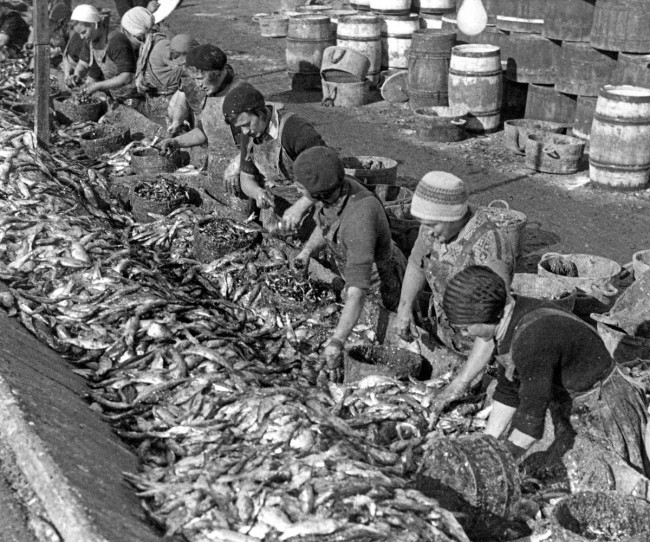 Fishmarkets of yesteryear: Herring