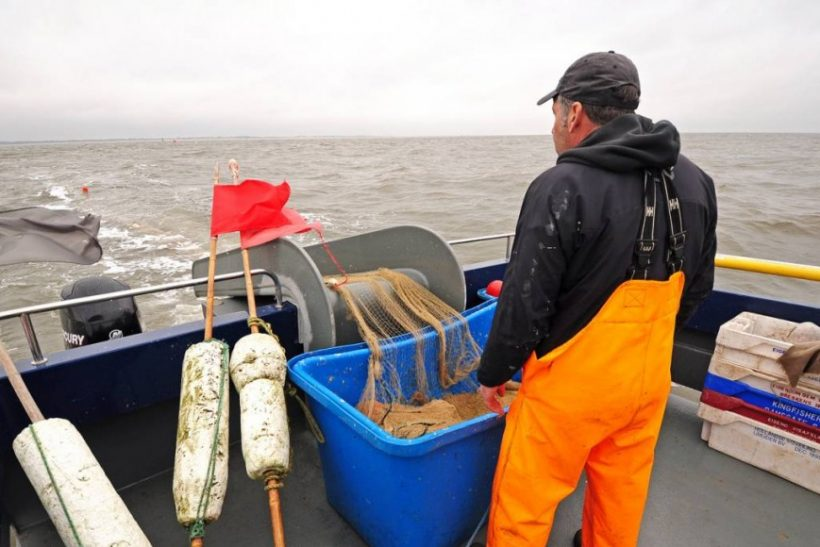 Norfolk longshore herring – going with the flow