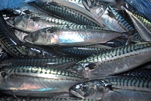 Killybegs mackerel