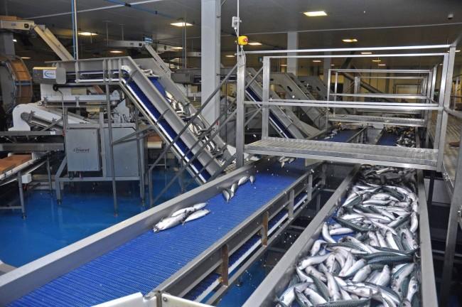 Killybegs fish processing