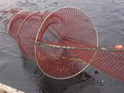 Eel research initiative