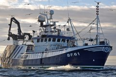 Boat of the Week – Transcend BF 61