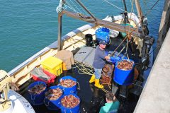 Mid-season lull for South Devon's crab fishermen