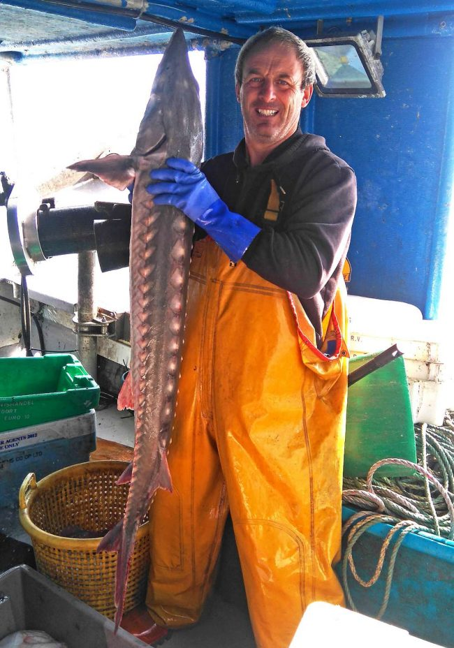 Unusual catches: Sturgeon off Newhaven
