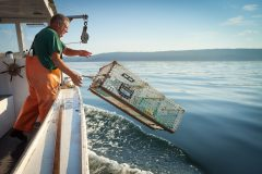 Up To 30% Of Lobster Catches Unmarketable By 127mm Rule
