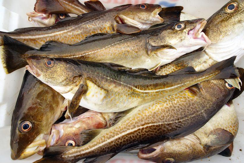N Sea cod in trouble