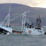 The Isle of Man king scallop fishery in focus The Isle of Man king scallop fishery in focus
