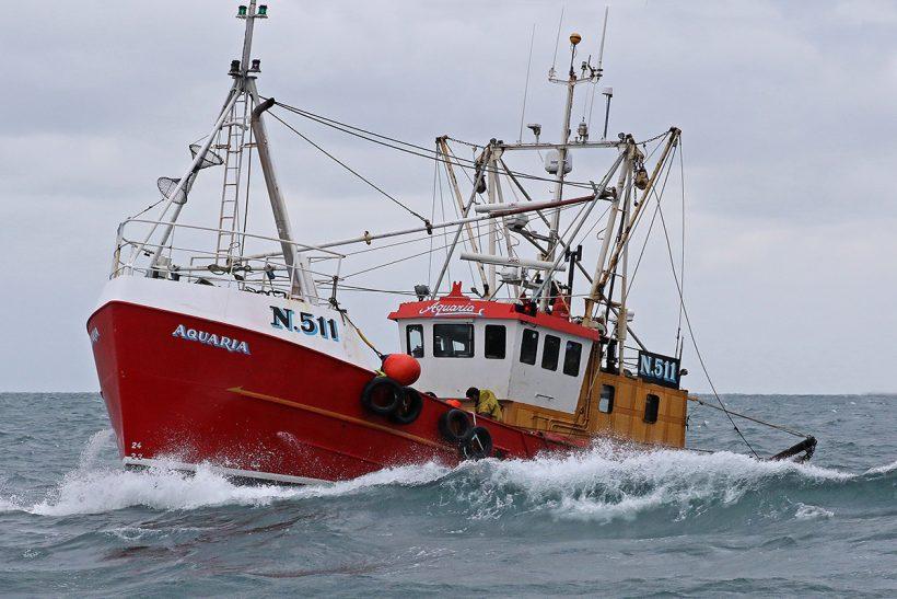 Isle of Man king scallop fishery in focus – P2
