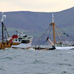 Isle of Man king scallop fishery