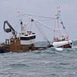 The Isle of Man king scallop fishery in focus