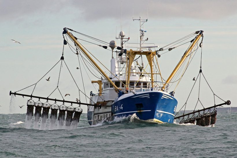 The Isle of Man king scallop fishery in focus – P1