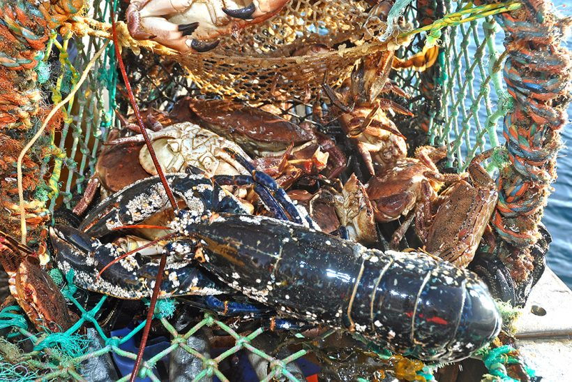 New conservation measures for Scottish shellfish
