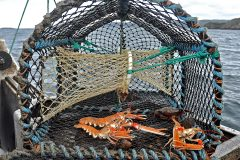 creel fishery