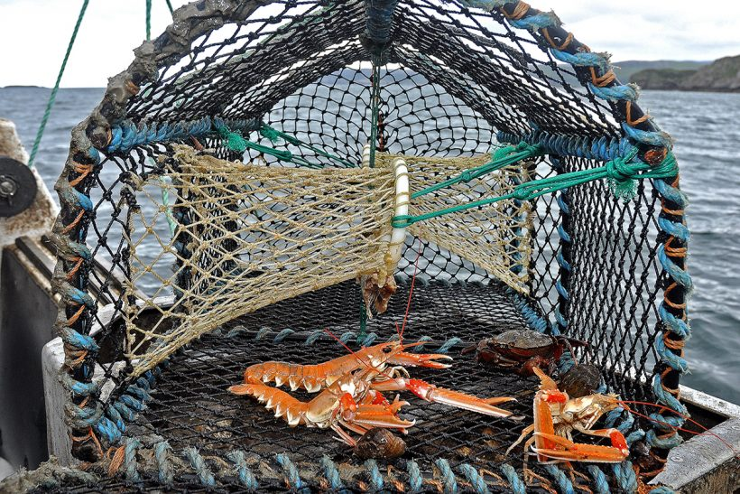 Creel group calls for 50% of Scots prawn fishery