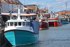 Shellfish catches lead the way for Yorkshire harbours