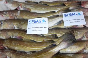 MSC-accredited North Sea Cod