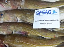 MSC-accredited North Sea Cod