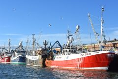 Whitefish boats landing into Merchant's Quay fishmarket where 23,412 more boxes of fish were sold in the first 16 weeks of this year.