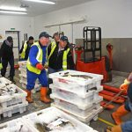 The first boxes of fish are pulled off the market floor at 7.30am along the wide access way