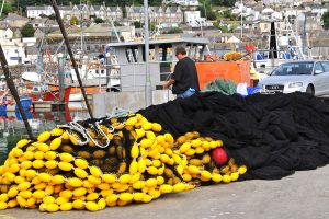 Sardine ring-netting is a small West Country fishery, but has brought considerable shore-work to the net-makers.