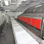 Fish are gutted and selected off the main conveyor that runs across the full beam.