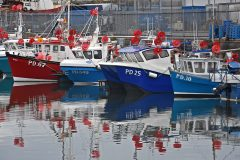 Inshore boats moored on their pontoon berths at Peterhead in the early morning, shortly before heading out to look for early-season summer mackerel.