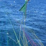 Lowering the all-important Simrad net sounder/sonar secured in the headline pocket.