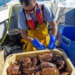 24. Peter nicking brown crab.