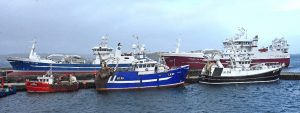 Pelagic, shellfish and whitefish boats berthed in Symbister harbour on Whalsay.