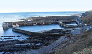 Burnmouth harbour has a long association with brown crab and lobster.