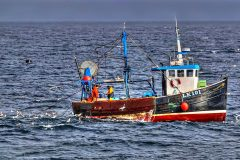 Whalsay skipper George Andrew Williamson's inshore trawler Radiance, towing for squid off Skerries. (Photo: Ivan Reid)