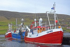 Local whitefish boats landed catches totalling £34.6m from 17,346t in Shetland last year.