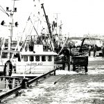 A new class of steel-hulled boats landing their catches into Buckie fishmarket.