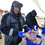 … including Johnny French and Tim Cook at the filleting table, who do a few skate wings.