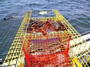 Lobster pots all around the world are made with Aquamesh.