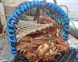 Brown crab moved from fifth position to third in terms of annual catch value, as a result of a 32% rise in average price value to £2,280 per tonne in 2018.