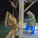 Securing the starboard trawl door to the gallows after the first tow of the night.