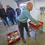 Luke weighing boxes of plaice, watched by MMO officials.