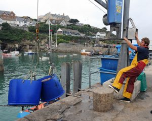 Bongos of brown crab being landed at Newquay.