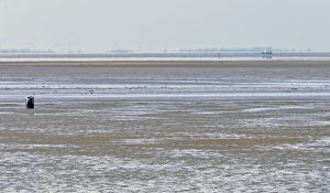 See any knights on horses lobbing spears? The Ferrier Sand off Snettisham, no longer part of the private fishery…