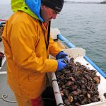 The painstaking process of sorting the catch begins after a short tow.