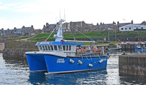Leah III heading out of Boddam harbour after dropping off a keeper of brown crab.