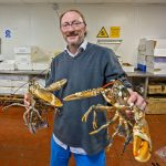 Simon Hutchings, of Hutchings Bros Seafood & Game Ltd, with some of Pete Dadds' catch of lobsters.