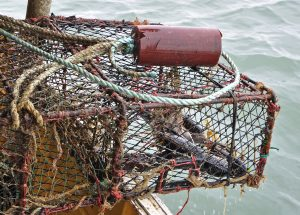 … although lobsters are the main target…