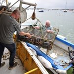 Back at the mooring, stored lobsters are retrieved, some bound for local restaurants and other buyers...