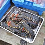 … and, of course, fresh lobsters.