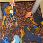 Crewmen filling bongos with female brown crab…