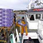 Taking cartons of frozen herring aboard Carvela…
