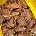 Cromer crab.