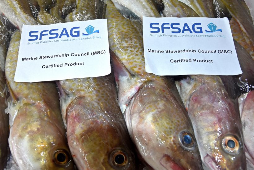 NS cod loses MSC label